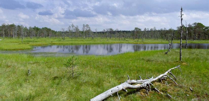 Viru mose og Nationalpark
